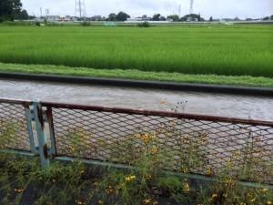 台風11号 西町用水路